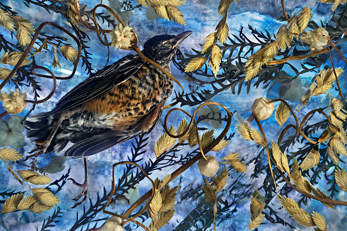 Untitled Bird I